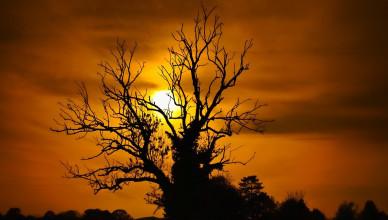 Ash_Tree_Silhouette_-_Hanley_Swan_-_UK