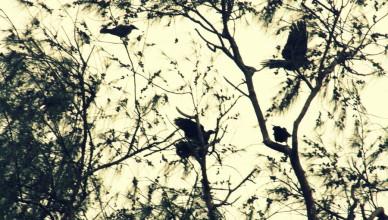 disturbed_birds_by_xxxangelsofemosxxx-d4y8y4v