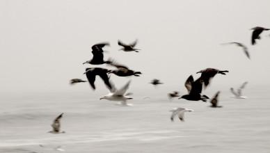 Birds Fly At Ocean by Aldon Baker