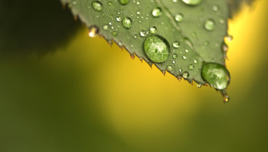 Morning Dew on Leaf by Aldon Baker