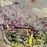 102, Antigua, A Strandid Turtle