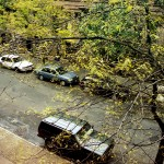 61, View From My Harlem Window, 1995