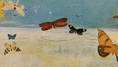butterflies_flying_above_clouds