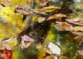 Autumn-leaves-floating3