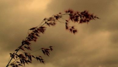 when_the_wild_wind_blows_by_siddharthnagarajan-d2ymz87