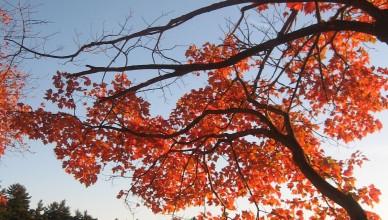 Leaves by Elizabeth Jordyn Blakely