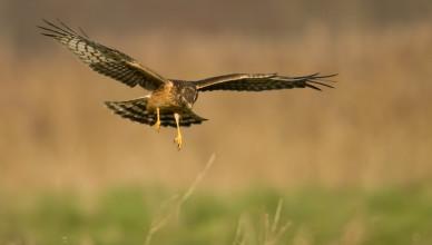 mass-audubon-dwws-2007-22