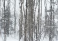 winter_woodland