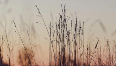 greece-sunset-field