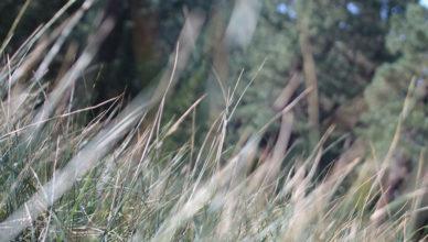 Grass_woods