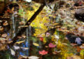 Autumn-leaves-floating