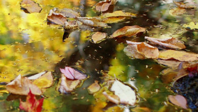 Autumn-leaves-floating3