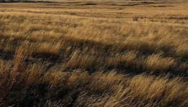 Grass_-_panoramio_(1)